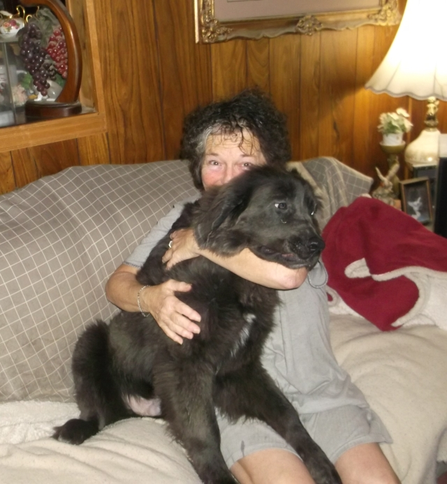 This is Maximus' page – The Newfoundland Dogs of Hunterhill
